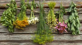 8 Herbs for Multiple Sclerosis Symptom Relief