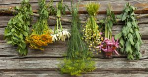 Herbs for Multiple Sclerosis